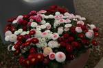 Blumen im Cafe-Garten